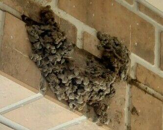 ツバメの巣の壊し方