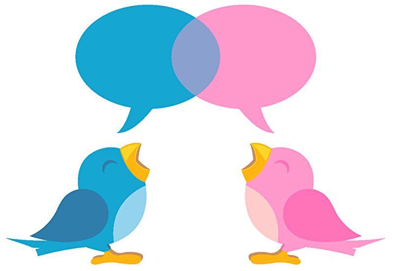 青とピンクの鳥が会話しているイラスト画像